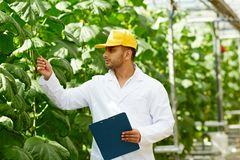Greenhouse Worker with Clipboard Royalty Free Stock Image