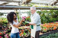 Greenhouse worker giving plants to a customer Royalty Free Stock Photo