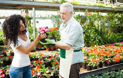 Greenhouse worker giving plants to a customer Stock Photo