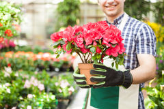 Greenhouse worker holding a flower pot Royalty Free Stock Photography