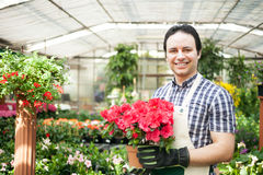Greenhouse worker holding a flower pot Royalty Free Stock Photos