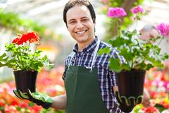 Greenhouse worker holding flower pots. Portrait of a smiling greenhouse worker holding flower pots Stock Photos