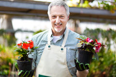 Greenhouse worker holding flower pots Stock Photography