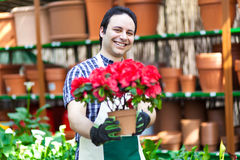 Greenhouse worker holding flower pots. Portrait of a smiling greenhouse worker holding a flower pot Royalty Free Stock Photography