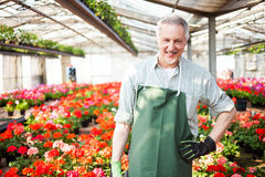 Greenhouse worker Stock Image