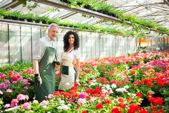 Greenhouse worker Royalty Free Stock Image