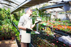 Greenhouse worker portrait Stock Image