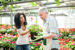 Greenhouse worker talking to a customer Stock Images