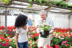 Greenhouse worker talking to a customer Royalty Free Stock Photography