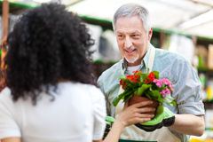Greenhouse worker talking to a customer Stock Photos