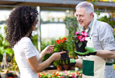 Greenhouse worker talking to a customer Stock Image