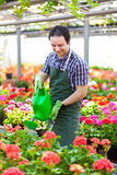 Greenhouse worker watering plants Stock Photography