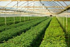 Greenhouse Royalty Free Stock Photos