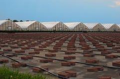 Greenhouses Stock Image