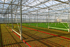 Greenhouses Royalty Free Stock Photography