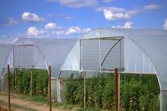 greenhouses Photo libre de droits