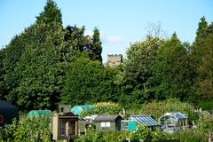 Greenhouses on allotments, UK. Stock Images