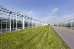 Greenhouses and an asphalt road Royalty Free Stock Image