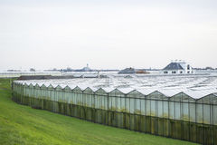 Greenhouses. And a Church in the background in 'het Westland', the Netherlands Royalty Free Stock Photo