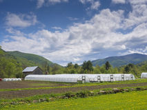 Greenhouses in countryside Stock Images