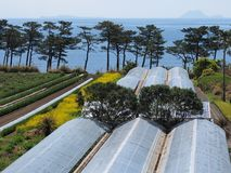 Greenhouses by the sea in Kyushu stock photos