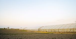 Greenhouses in the field for seedlings of crops. Growing organic vegetables. Lending to farmers. Farmlands agriculture agro-. Industrial complex. Winter crops stock photography