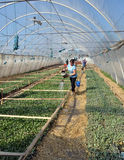 Greenhouses for growing seedlings_2 Royalty Free Stock Photography