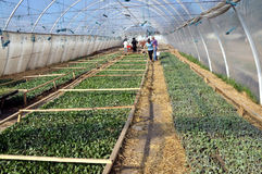 Greenhouses for growing seedlings Royalty Free Stock Photography