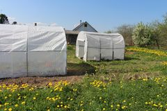Greenhouses for growing vegetables four. Plastic greenhouses for growing vegetables on the farm field Royalty Free Stock Image