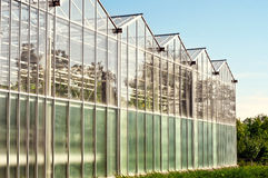 Greenhouses for growing vegetables Royalty Free Stock Photo