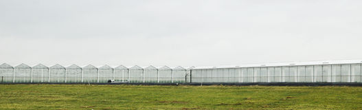 Greenhouses in the Netherlands. Glass greenhouses in the Westland area of the Netherlands. Westland is a famous greenhouse part of the Netherlands also known as Royalty Free Stock Photo