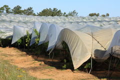 Greenhouses plantations Royalty Free Stock Photography