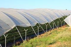 Greenhouses plantations Stock Photo