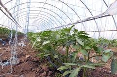Greenhouses with polyethylene film_5 stock image