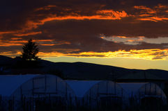 Greenhouses sunset Stock Photography
