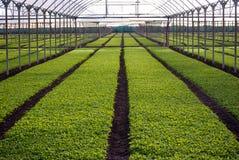 Greenhouses Stock Photos