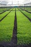 Greenhouses Stock Photo