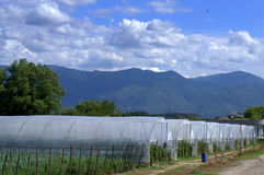 Greenhouses Royalty Free Stock Images