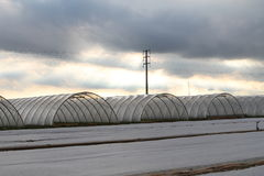 Greenhouses. Whit a cloudy sky royalty free stock photos