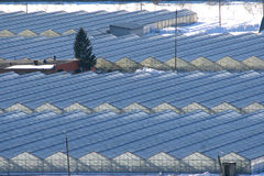 Greenhouses and winter snows Stock Photos