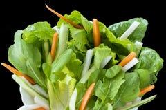 Greenies do menu dos peixes da mistura com folhas do foguete, cenouras, alface e a maçã cortada da terra foto de stock