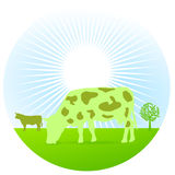 Greening cow Royalty Free Stock Photo