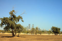 Greening Qatar Stock Image