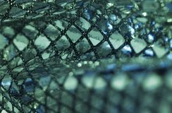 Greenish metallic sequined back Stock Photos