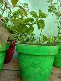 Greenish plants royalty free stock image