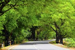 Curvy road in jungle stock photos