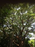 Tree shade. Greenish tree shade in daytime stock photo