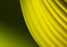 Greenish Yellow Paper Background Royalty Free Stock Photography