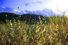 greenland Royaltyfria Bilder