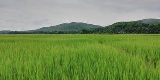 greenland fotos de stock royalty free